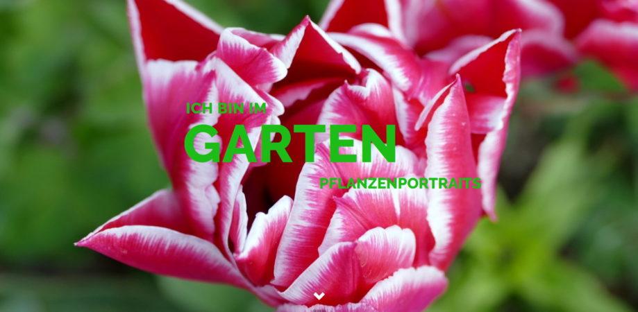 ichbinimgarten.de - Pflanzenportraits